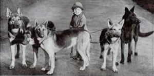 German Shepherds 1939. Beautiful!