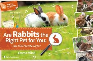 Are Rabbits the Right Pet for You