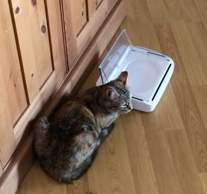 Our cat Stella with her motion-sensor bowl. I think she was trying to tell me something!