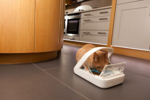 Chip-reading feeders are an easy way to make sure your cats only get the food they are meant to have.