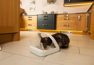 Products like the chip-reading feeders can really help owners and their cats.